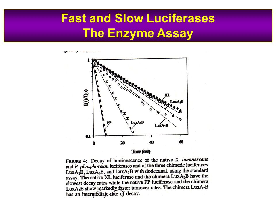 Fast and Slow Luciferases The Enzyme Assay