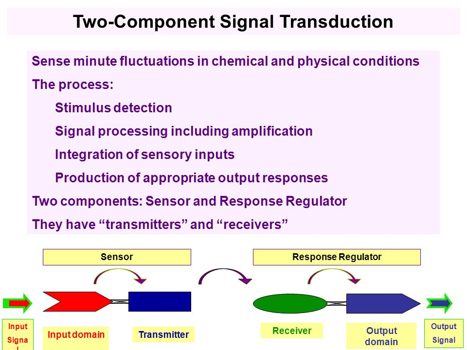 Sense minute fluctuations in chemical and physical conditions The process: Stimulus detection Signal processing including amplification Integration of sensory inputs Production of appropriate output responses Two components: Sensor and Response Regulator They have transmitters and receivers Input domainTransmitter Sensor ReceiverOutput domain Response Regulator Input Signa l Output Signal Two-Component Signal Transduction