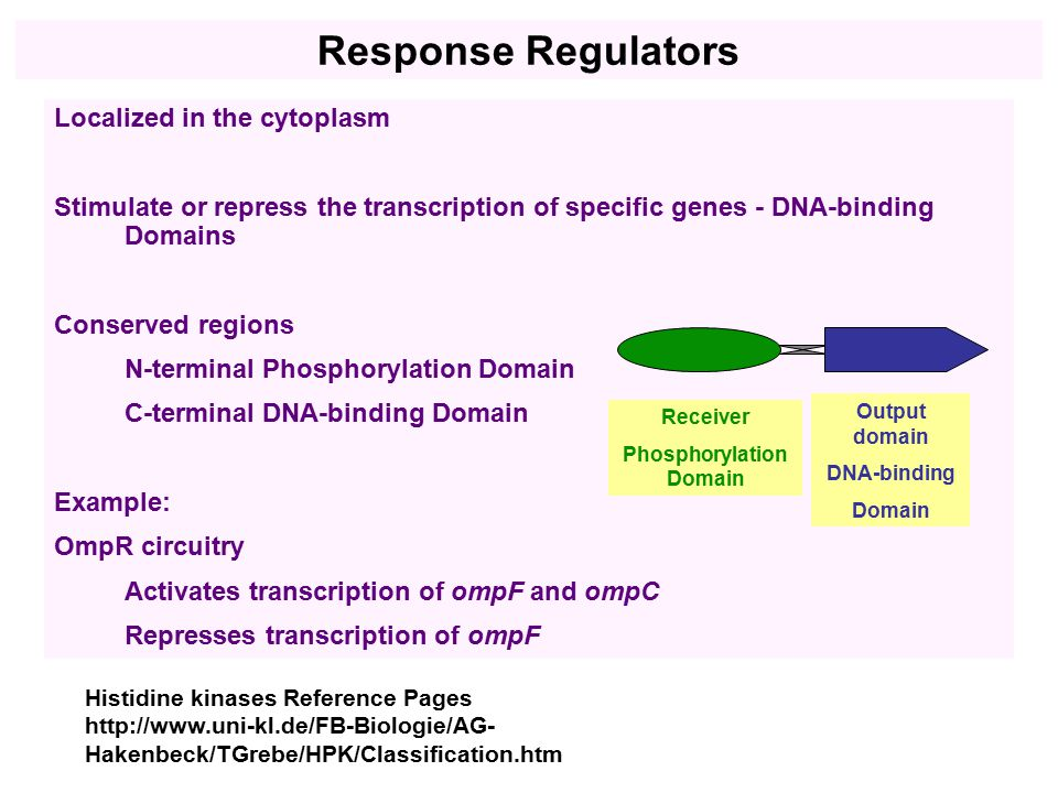 Localized in the cytoplasm Stimulate or repress the transcription of specific genes - DNA-binding Domains Conserved regions N-terminal Phosphorylation Domain C-terminal DNA-binding Domain Example: OmpR circuitry Activates transcription of ompF and ompC Represses transcription of ompF Histidine kinases Reference Pages http://www.uni-kl.de/FB-Biologie/AG- Hakenbeck/TGrebe/HPK/Classification.htm Receiver Phosphorylation Domain Output domain DNA-binding Domain Response Regulators