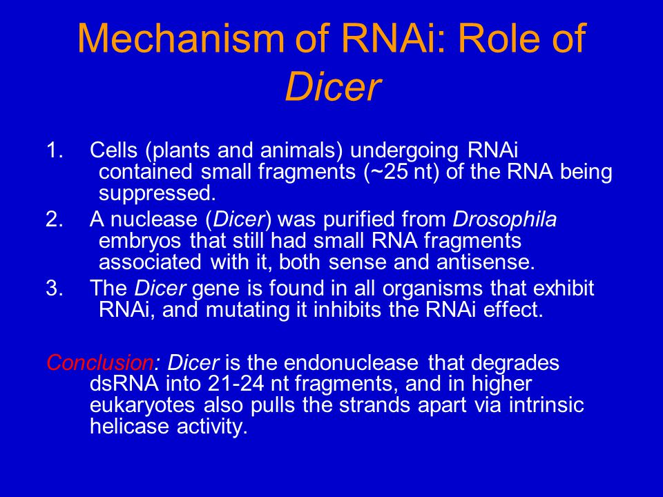 Mechanism of RNAi: Role of Dicer 1.Cells (plants and animals) undergoing RNAi contained small fragments (~25 nt) of the RNA being suppressed. 2.A nucl
