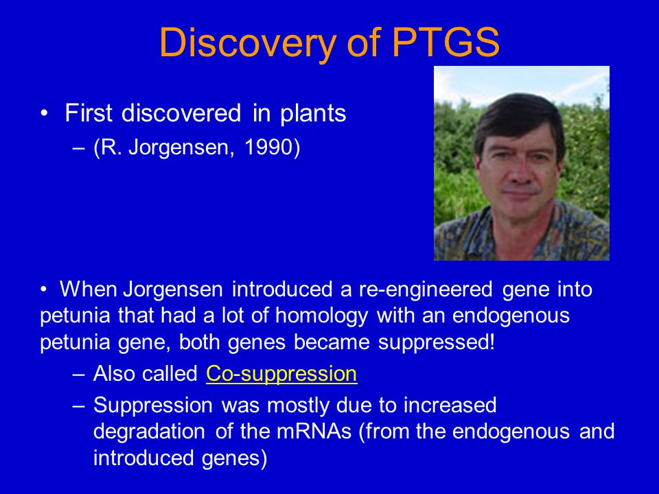 Discovery of PTGS First discovered in plants –(R. Jorgensen, 1990) When Jorgensen introduced a re-engineered gene into petunia that had a lot of homol