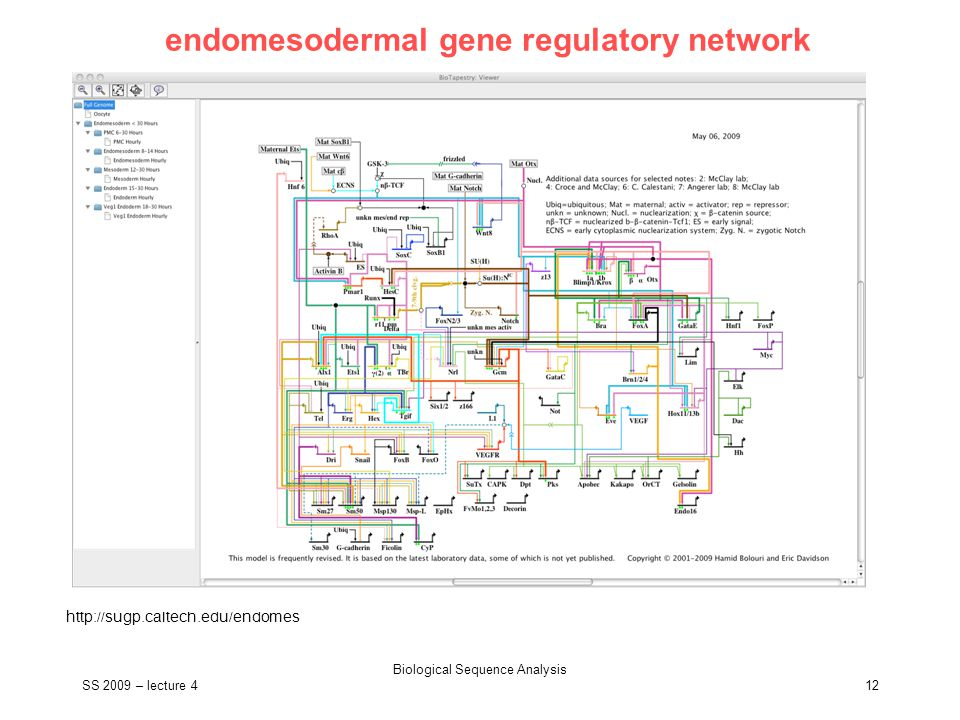 SS 2009 – lecture 4 Biological Sequence Analysis 12 endomesodermal gene regulatory network http://sugp.caltech.edu/endomes