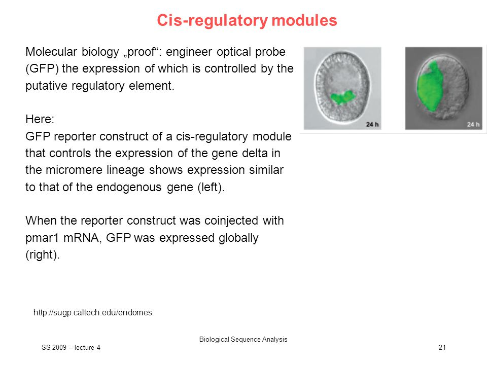 "SS 2009 – lecture 4 Biological Sequence Analysis 21 Cis-regulatory modules http://sugp.caltech.edu/endomes Molecular biology ""proof"": engineer optical"