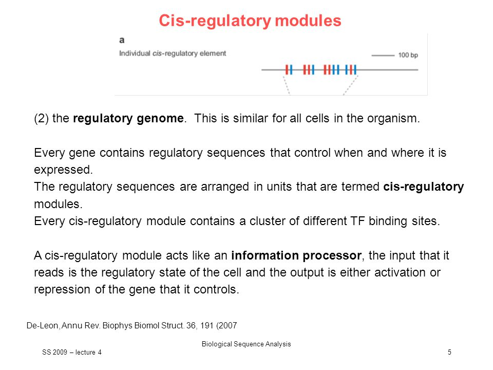 SS 2009 – lecture 4 Biological Sequence Analysis 5 Cis-regulatory modules De-Leon, Annu Rev. Biophys Biomol Struct. 36, 191 (2007 (2) the regulatory g