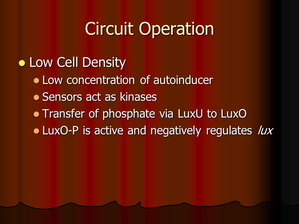 Circuit Operation Low Cell Density Low Cell Density Low concentration of autoinducer Low concentration of autoinducer Sensors act as kinases Sensors act as kinases Transfer of phosphate via LuxU to LuxO Transfer of phosphate via LuxU to LuxO LuxO-P is active and negatively regulates lux LuxO-P is active and negatively regulates lux