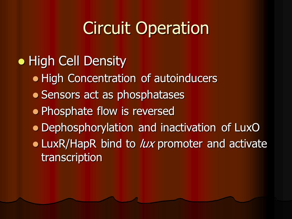 Circuit Operation High Cell Density High Cell Density High Concentration of autoinducers High Concentration of autoinducers Sensors act as phosphatases Sensors act as phosphatases Phosphate flow is reversed Phosphate flow is reversed Dephosphorylation and inactivation of LuxO Dephosphorylation and inactivation of LuxO LuxR/HapR bind to lux promoter and activate transcription LuxR/HapR bind to lux promoter and activate transcription