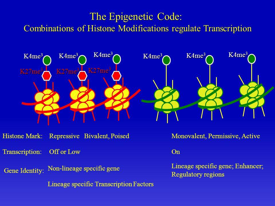 The Epigenetic Code: Combinations of Histone Modifications regulate Transcription K27me 3 K4me 3 Histone Mark: Gene Identity: Repressive Non-lineage specific gene Lineage specific gene; Enhancer; Regulatory regions Monovalent, Permissive, ActiveBivalent, Poised K4me 3 Lineage specific Transcription Factors Transcription:Off or LowOn