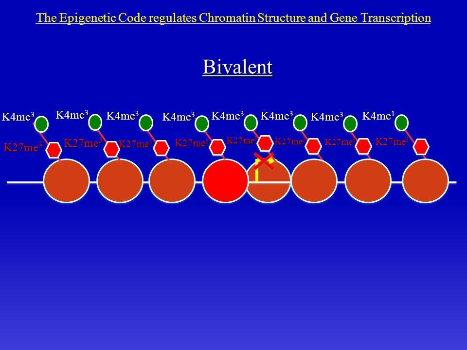 K27me 3 K4me 1 K4me 3 The Epigenetic Code regulates Chromatin Structure and Gene Transcription K27me 3 K4me 3 K27me 3 K4me 3 K27me 3 K4me 3 Bivalent