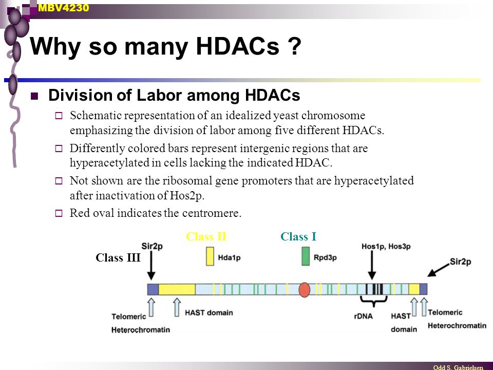 MBV4230 Odd S. Gabrielsen Why so many HDACs ? Division of Labor among HDACs  Schematic representation of an idealized yeast chromosome emphasizing th