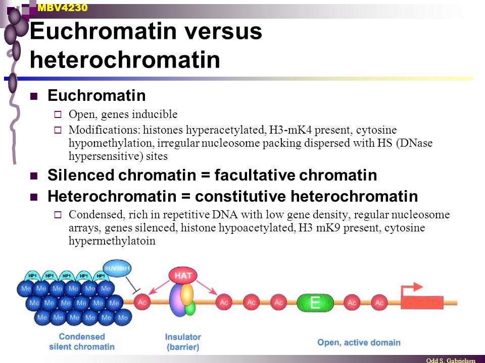 MBV4230 Odd S. Gabrielsen Euchromatin versus heterochromatin Euchromatin  Open, genes inducible  Modifications: histones hyperacetylated, H3-mK4 pre
