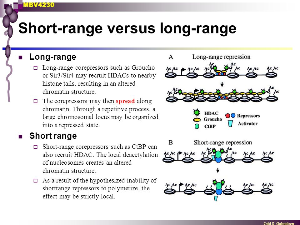MBV4230 Odd S. Gabrielsen Short-range versus long-range Long-range  Long-range corepressors such as Groucho or Sir3/Sir4 may recruit HDACs to nearby