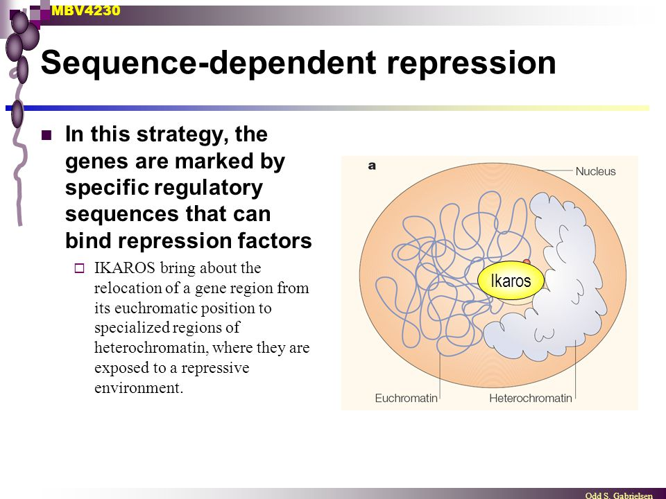 MBV4230 Odd S. Gabrielsen Sequence-dependent repression In this strategy, the genes are marked by specific regulatory sequences that can bind repressi