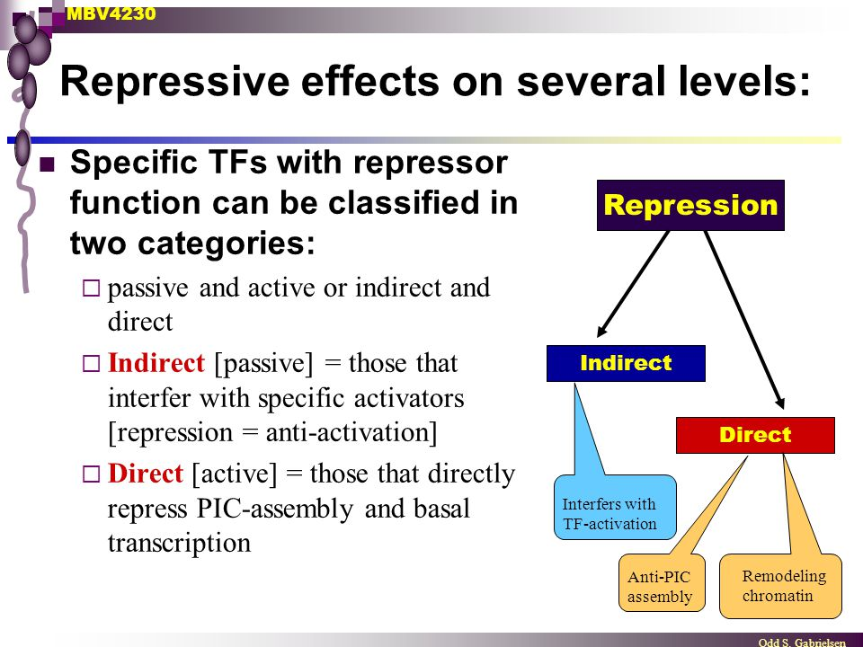 MBV4230 Odd S. Gabrielsen Repressive effects on several levels: Specific TFs with repressor function can be classified in two categories:  passive an