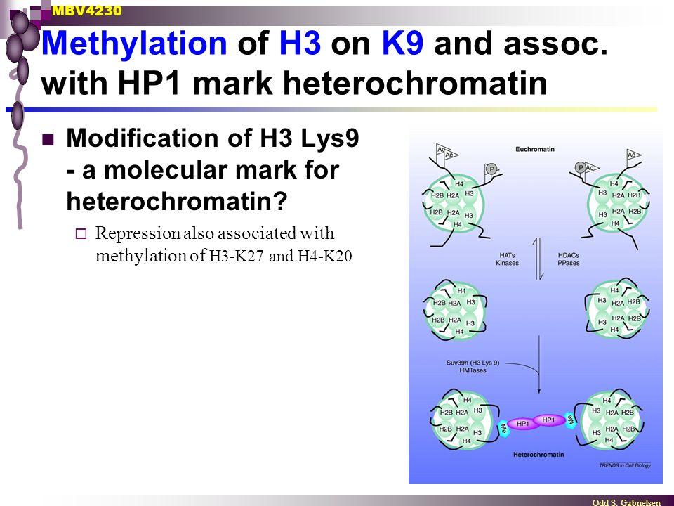 MBV4230 Odd S. Gabrielsen Methylation of H3 on K9 and assoc. with HP1 mark heterochromatin Modification of H3 Lys9 - a molecular mark for heterochroma