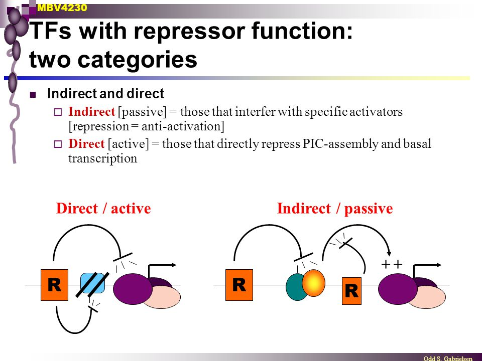 MBV4230 Odd S. Gabrielsen TFs with repressor function: two categories Indirect and direct  Indirect [passive] = those that interfer with specific act