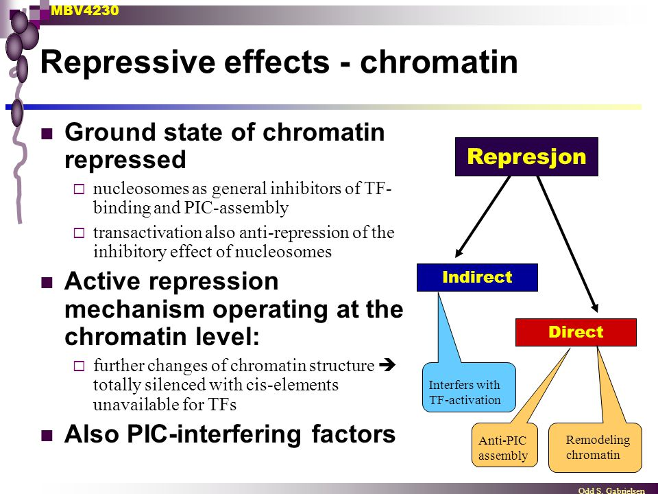 MBV4230 Odd S. Gabrielsen Represjon Indirect Direct Interfers with TF-activation Remodeling chromatin Anti-PIC assembly Repressive effects - chromatin