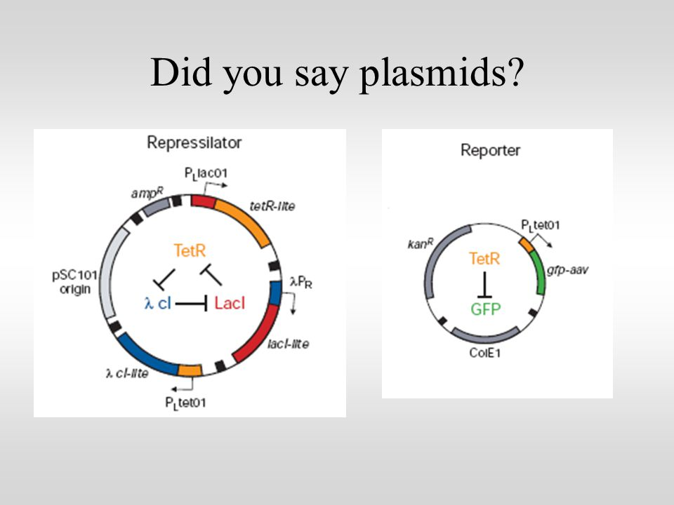 Did you say plasmids