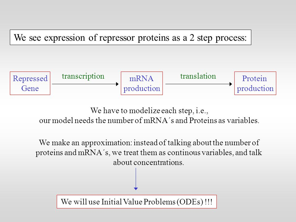 We see expression of repressor proteins as a 2 step process: Repressed Gene mRNA production Protein production transcriptiontranslation We have to modelize each step, i.e., our model needs the number of mRNA´s and Proteins as variables.