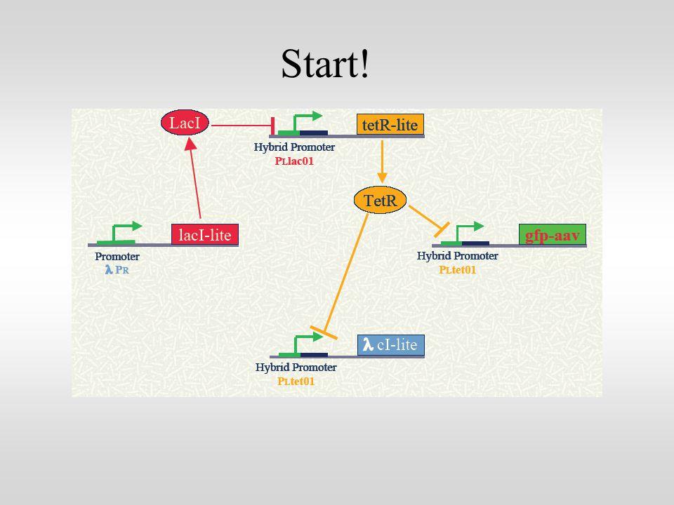 mRNA transcription: mRNA degradation + modulated transcription mRNA degradation rate (the same for all mRNA´s) =LacITetR l CI = Protein translation: protein degradation + modulated translation LacITetR l CI protein degradation rate (the same for all proteins) Symmetry is needed for periodic behaviour!!