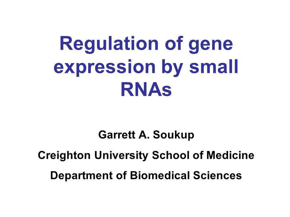 Regulation of gene expression by small RNAs Garrett A. Soukup Creighton University School of Medicine Department of Biomedical Sciences