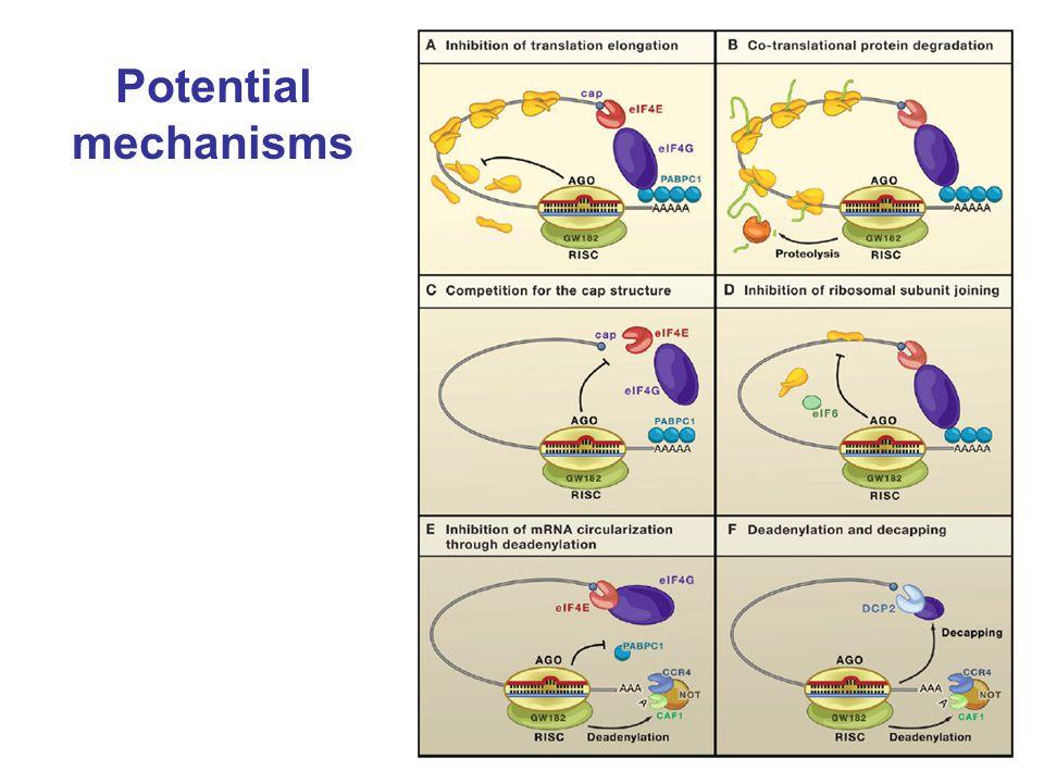 Potential mechanisms