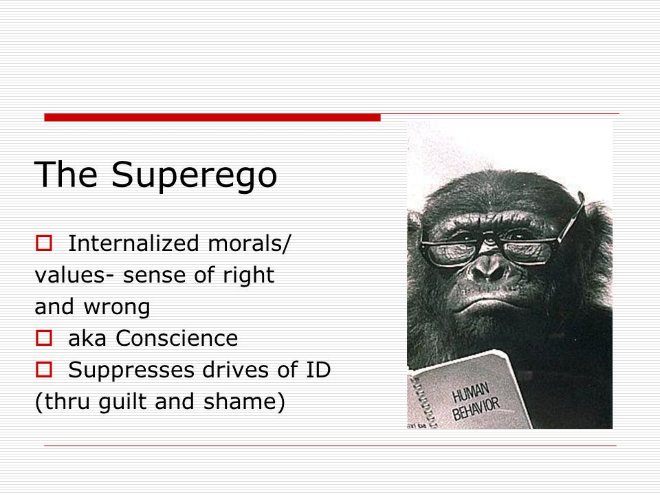 The Superego  Internalized morals/ values- sense of right and wrong  aka Conscience  Suppresses drives of ID (thru guilt and shame)