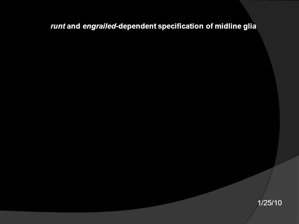 1/25/10 runt and engrailed-dependent specification of midline glia