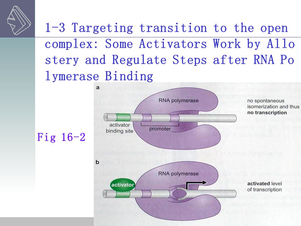 1-4 Action at a Distance and DNA Looping.