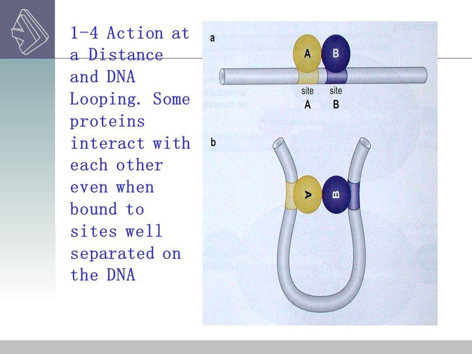 σFACTORS EXAMPLE TWO---- ALTERNATIVE σFACTORS 2-7 Alternative s factor direct RNA polymerase to alternative site of promoters