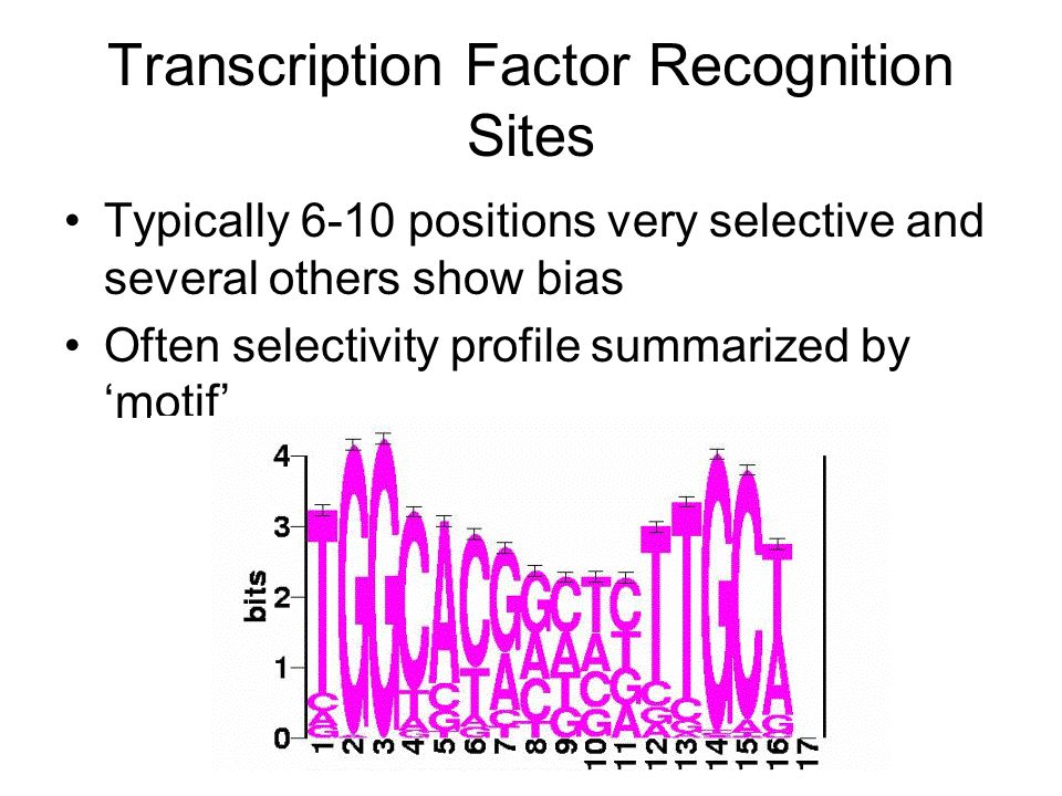 Transcription Factor Recognition Sites Typically 6-10 positions very selective and several others show bias Often selectivity profile summarized by 'motif'
