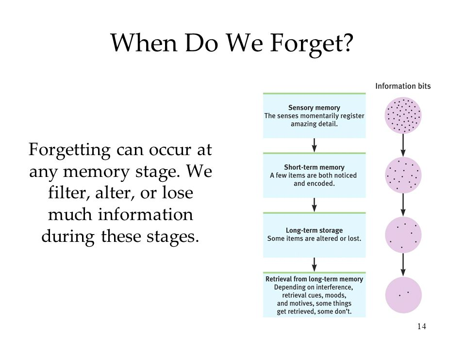 14 When Do We Forget. Forgetting can occur at any memory stage.