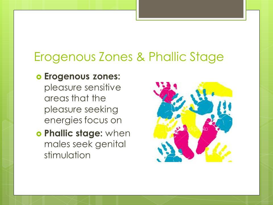 Erogenous Zones & Phallic Stage  Erogenous zones: pleasure sensitive areas that the pleasure seeking energies focus on  Phallic stage: when males se