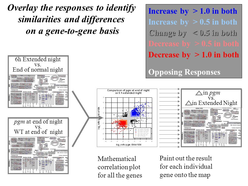 Overlay the responses to identify similarities and differences on a gene-to-gene basis pgm at end of night vs.