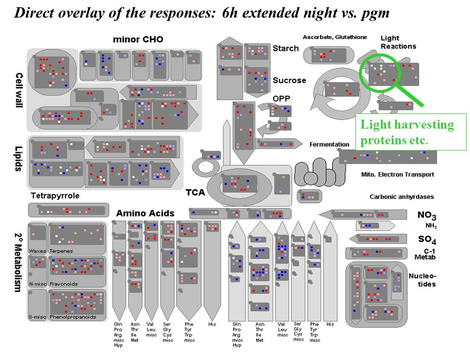Direct overlay of the responses: 6h extended night vs. pgm Light harvesting proteins etc.