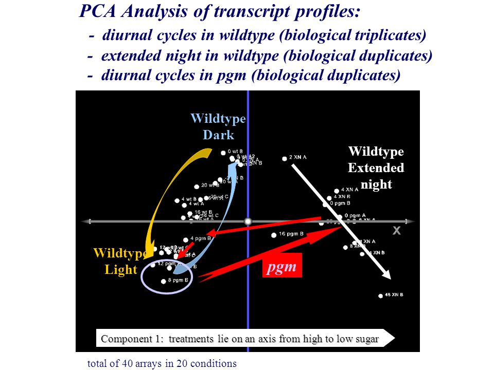 PCA Analysis of transcript profiles: - diurnal cycles in wildtype (biological triplicates) - extended night in wildtype (biological duplicates) - diurnal cycles in pgm (biological duplicates) Wildtype Extended night Wildtype Light Wildtype Dark pgm Component 1: treatments lie on an axis from high to low sugar total of 40 arrays in 20 conditions
