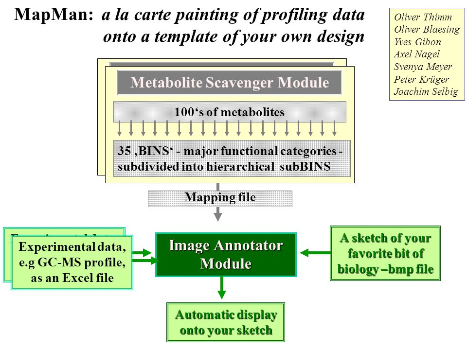 MapMan: a la carte painting of profiling data onto a template of your own design Transcript Scavenger Module 35 'BINS' - major functional categories - subdivided into hierarchical subBINS 23,000 genes Image Annotator Module Oliver Thimm Oliver Blaesing Yves Gibon Axel Nagel Svenya Meyer Peter Krüger Joachim Selbig Mapping file Experimental data, e.g 22k Affy array, as an Excel file A sketch of your favorite bit of biology –bmp file Automatic display onto your sketch Metabolite Scavenger Module 35 'BINS' - major functional categories - subdivided into hierarchical subBINS 100's of metabolites Experimental data, e.g GC-MS profile, as an Excel file