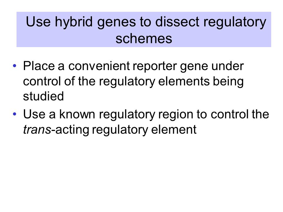 Use hybrid genes to dissect regulatory schemes Place a convenient reporter gene under control of the regulatory elements being studied Use a known regulatory region to control the trans-acting regulatory element