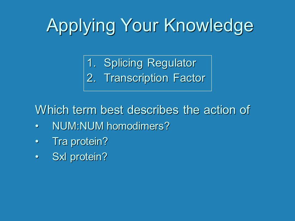 Applying Your Knowledge Which term best describes the action of NUM:NUM homodimers?NUM:NUM homodimers? Tra protein?Tra protein? Sxl protein?Sxl protei
