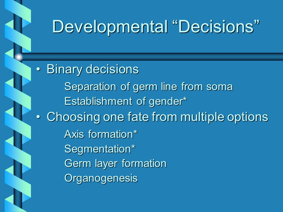 """Developmental """"Decisions"""" Binary decisionsBinary decisions Separation of germ line from soma Establishment of gender* Choosing one fate from multiple"""