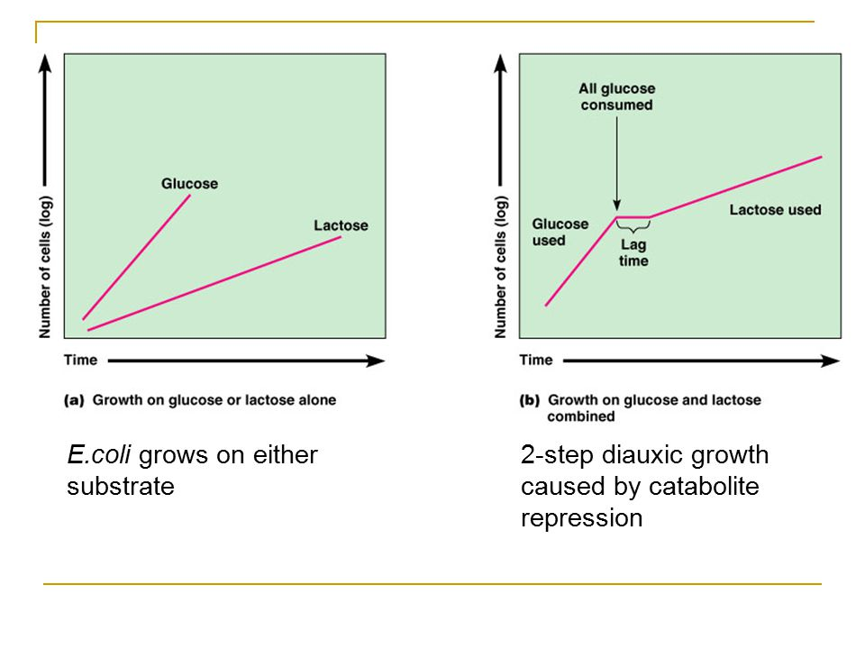2-step diauxic growth caused by catabolite repression E.coli grows on either substrate