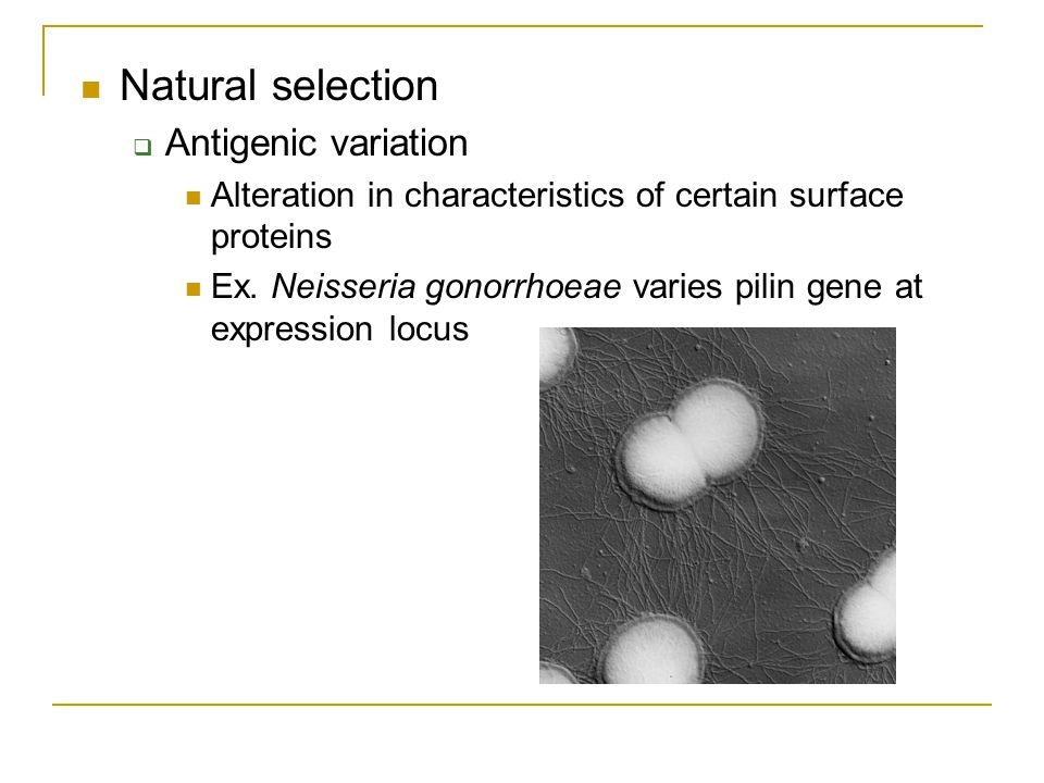 Natural selection  Antigenic variation Alteration in characteristics of certain surface proteins Ex. Neisseria gonorrhoeae varies pilin gene at expre