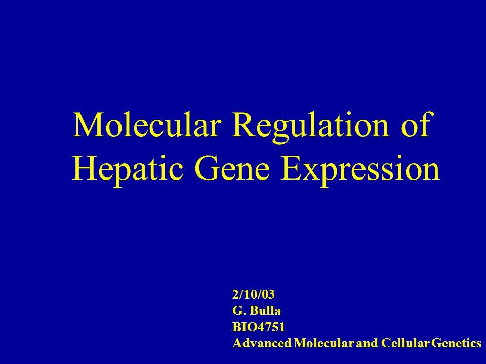 Molecular Regulation of Hepatic Gene Expression 2/10/03 G.