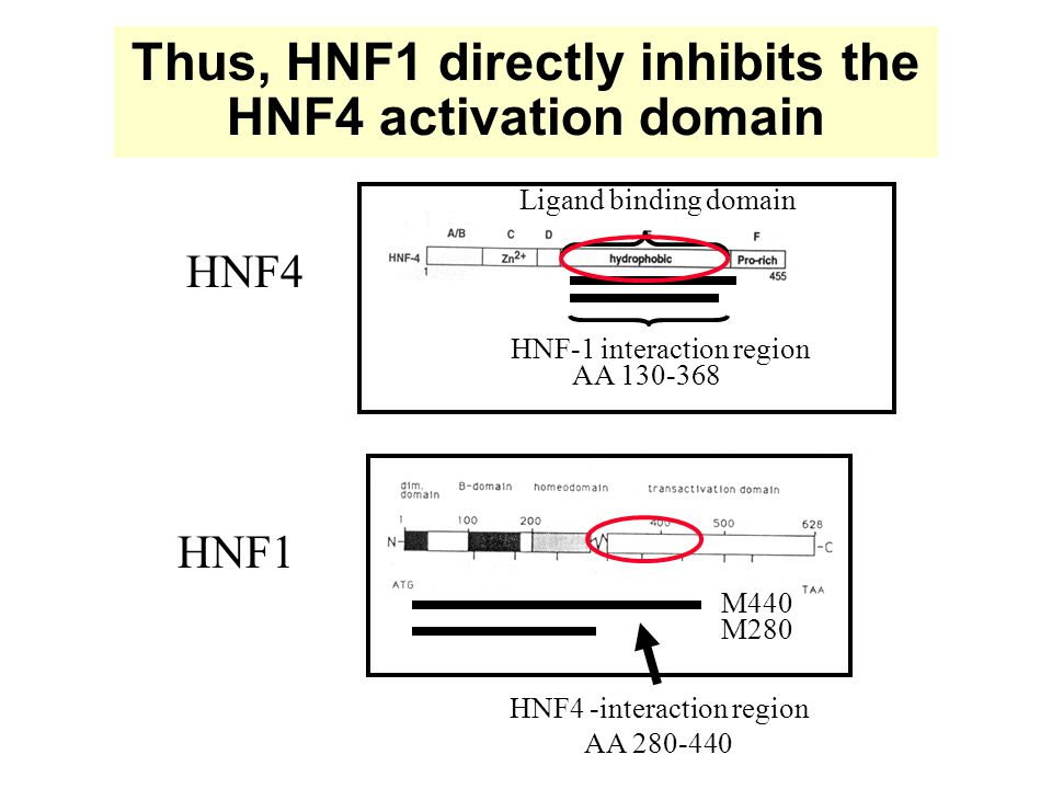 Fig. 4- How does HNF1 repress HNF4-mediated transcription.