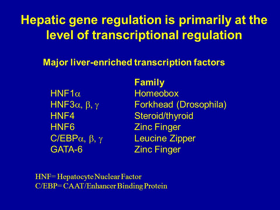 HNF1-mediated rescue Hepatic Gene Expression in H11 Hepatoma Variant Cells HNF4 Activator.