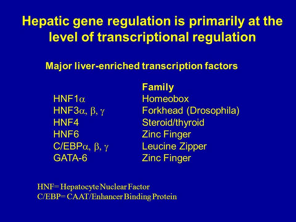 Major liver-enriched transcription factors Family HNF1  Homeobox HNF3  Forkhead (Drosophila) HNF4Steroid/thyroid HNF6Zinc Finger C/EBP  Leucine Zipper GATA-6Zinc Finger Hepatic gene regulation is primarily at the level of transcriptional regulation HNF= Hepatocyte Nuclear Factor C/EBP= CAAT/Enhancer Binding Protein