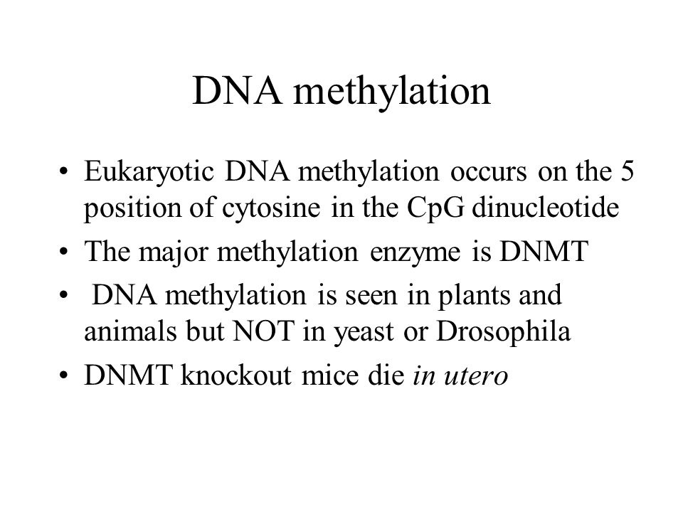 DNA methylation Eukaryotic DNA methylation occurs on the 5 position of cytosine in the CpG dinucleotide The major methylation enzyme is DNMT DNA methylation is seen in plants and animals but NOT in yeast or Drosophila DNMT knockout mice die in utero