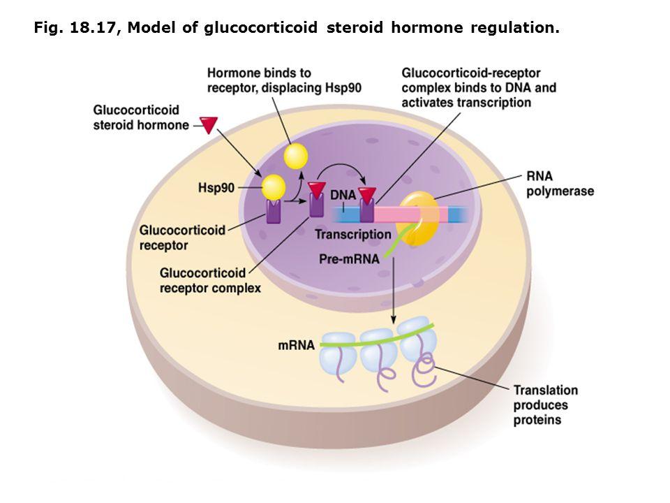 Fig. 18.17, Model of glucocorticoid steroid hormone regulation.
