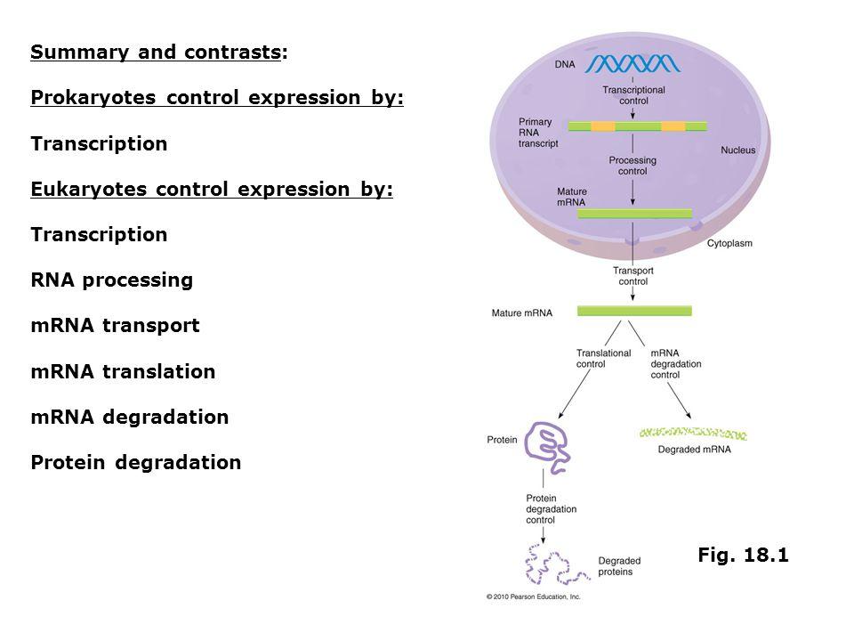 Summary and contrasts: Prokaryotes control expression by: Transcription Eukaryotes control expression by: Transcription RNA processing mRNA transport