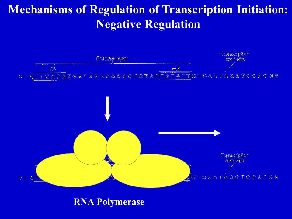 Mechanisms of Regulation of Transcription Initiation: Negative Regulation RNA Polymerase