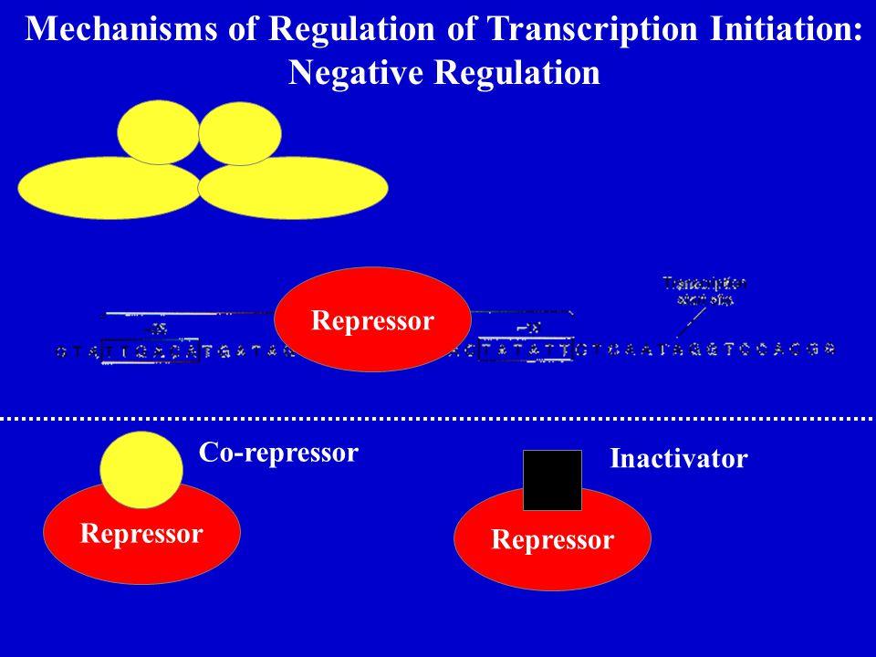 Mechanisms of Regulation of Transcription Initiation: Negative Regulation Repressor Co-repressor Repressor Inactivator